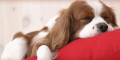 Love Pet - para quem ama seus bichinhos